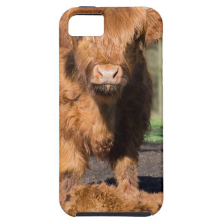 Mother scottish highlander cow near newborn calf iPhone 5 covers