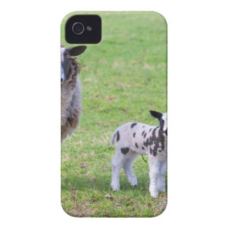Mother sheep with two newborn lambs in spring iPhone 4 Case-Mate case