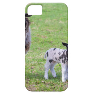 Mother sheep with two newborn lambs in spring iPhone 5 cover