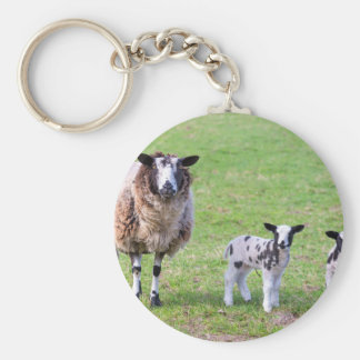 Mother sheep with two newborn lambs in spring key ring