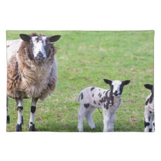 Mother sheep with two newborn lambs in spring placemat
