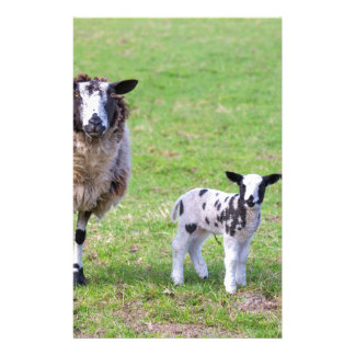 Mother sheep with two newborn lambs in spring stationery