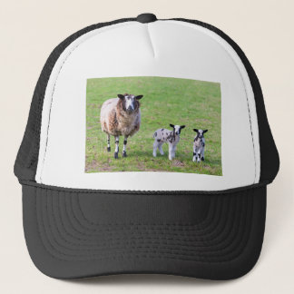 Mother sheep with two newborn lambs in spring trucker hat