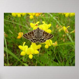 Mother Shipton Moth Poster