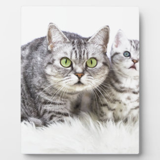 Mother silver tabby cat with young kitten.jpg photo plaque