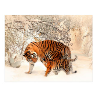 Mother Tiger and Cub in the Snowy Woods Postcard