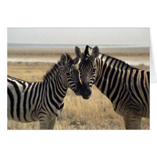 Mother zebra and young zebra card