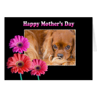 Mother's Day Cavalier King Charles Daisies Card