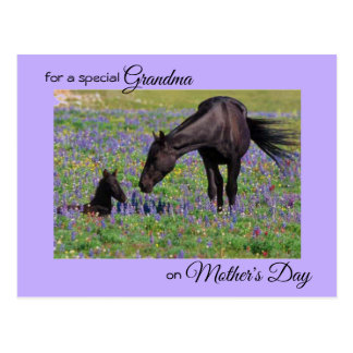 Mother's Day for Grandma Mare & Foal Photo Postcard