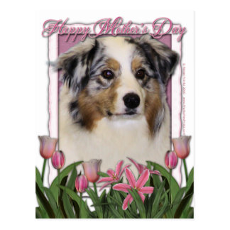 Mothers Day - Pink Tulips - Australia Shepherd Post Cards