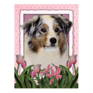 Mothers Day - Pink Tulips - Australia Shepherd Postcard