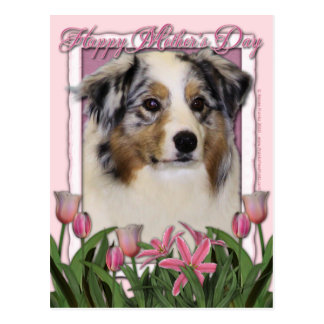 Mothers Day - Pink Tulips - Australia Shepherd Post Card