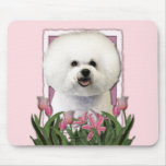 Mothers Day - Pink Tulips - Bichon Frise