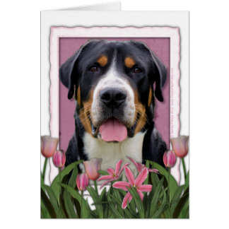 Mothers Day Pink Tulips Greater Swiss Mountain Dog Greeting Card