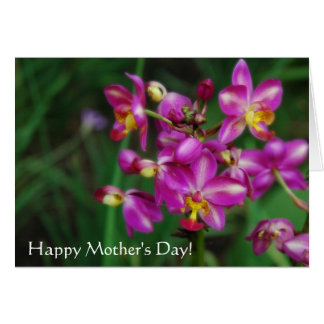 Mother's day - Purple orchids Photo Card