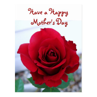 Mother's Day Red Rose Postcard