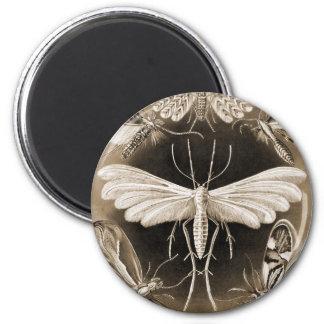Moths 6 Cm Round Magnet