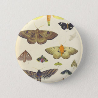Moths and Butterflies of New Zealand 6 Cm Round Badge