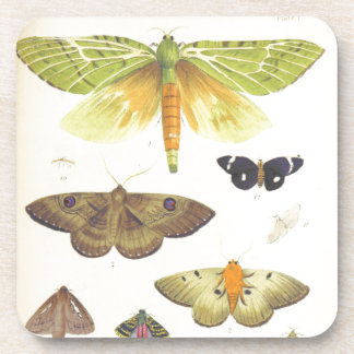 Moths and Butterflies of New Zealand Coaster