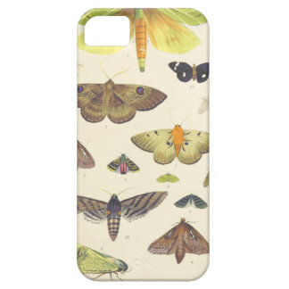 Moths and Butterflies of New Zealand iPhone 5 Covers