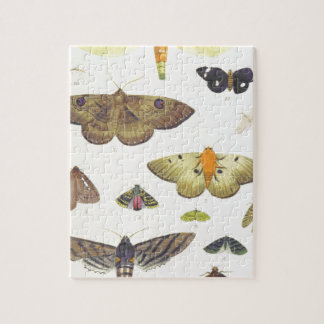 Moths and Butterflies of New Zealand Jigsaw Puzzle
