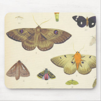 Moths and Butterflies of New Zealand Mouse Pad
