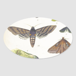 Moths and Butterflies of New Zealand Oval Sticker