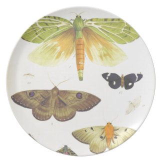 Moths and Butterflies of New Zealand Plate