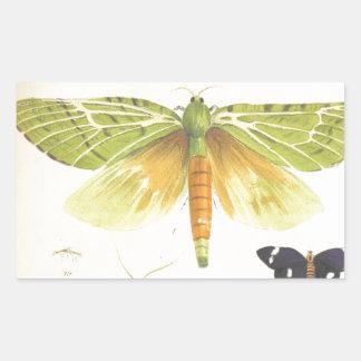 Moths and Butterflies of New Zealand Rectangular Sticker