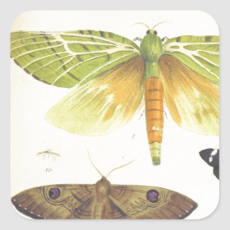 Moths and Butterflies of New Zealand Square Sticker