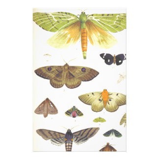 Moths and Butterflies of New Zealand Stationery