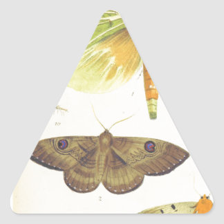 Moths and Butterflies of New Zealand Triangle Sticker