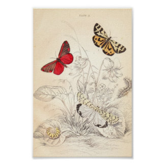 Moths and Butterflies Poster
