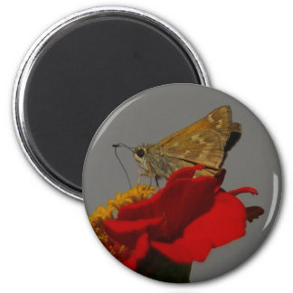 Moths and Red Zinnia Magnet