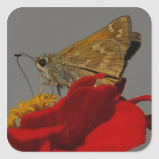 Moths and Red Zinnia Square Sticker