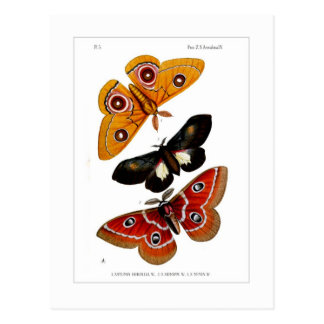 Moths Postcard
