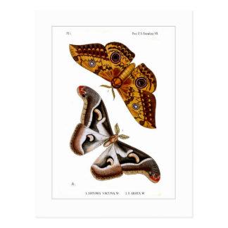 Moths Postcard