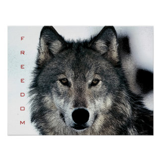 Motivational Freedom Courage Wolf Poster Print