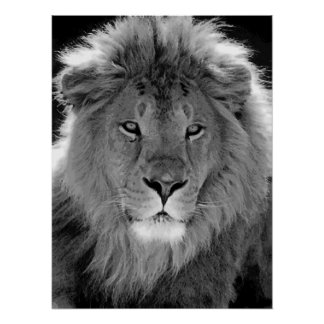 Motivational Leadership Lion Black & White Poster