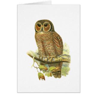 Mottled Wood Owl Card
