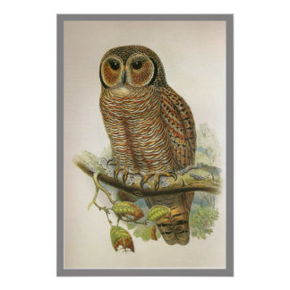 Mottled Wood Owl Poster
