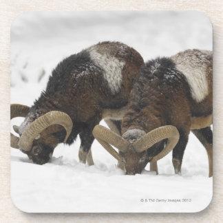 Mouflons in Winter, Germany Drink Coasters