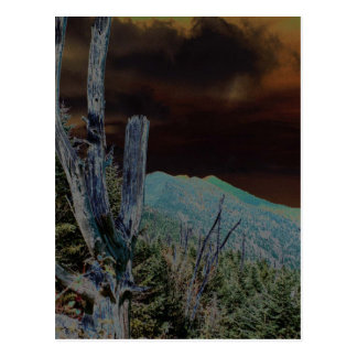 Mount Mitchell, North Carolina Postcard