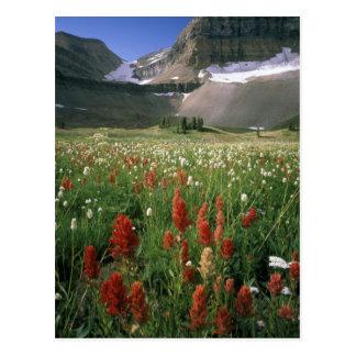 MOUNT TIMPANOGOS WILDERNESS, UT, US, POSTCARD