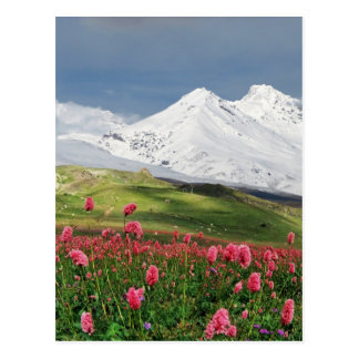 Mountain and Meadow Postcard