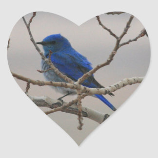 Mountain Bluebird Heart Sticker