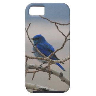 Mountain Bluebird iPhone 5 Case