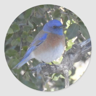 Mountain Bluebird Round Sticker