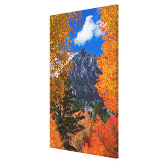 Mountain framed in fall foliage, CA Canvas Print