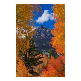 Mountain framed in fall foliage, CA Poster